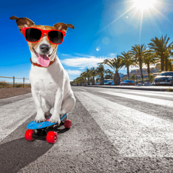 Doggo enjoying his equity release.