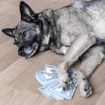 Doggo holding all the money